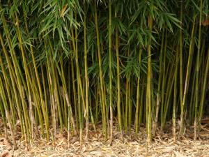 Бамбук Фонтан